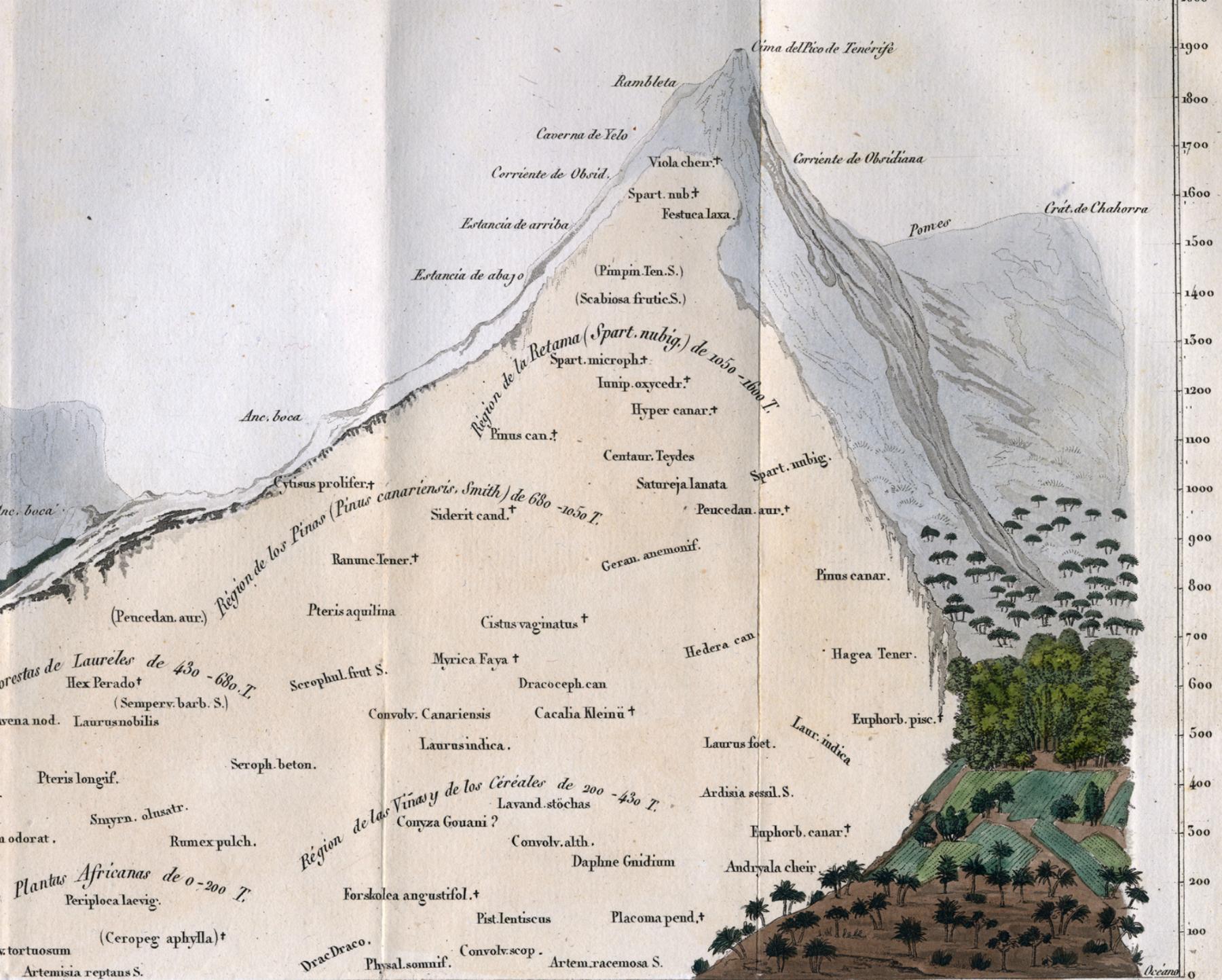 Alexander von Humboldt-03