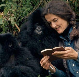 Dian Fossey: biografía, muerte, libros, frases, y más