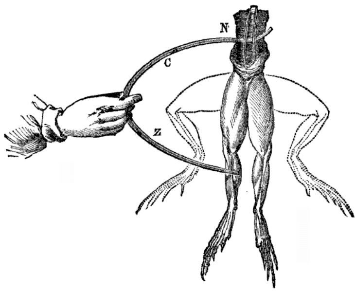 experimento ancas de rana