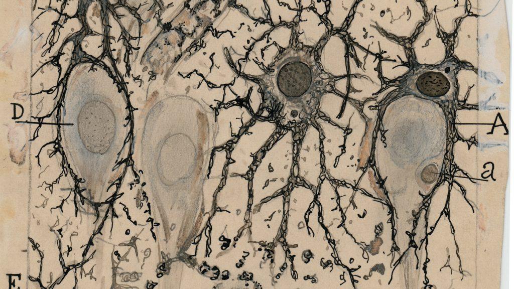 Santiago-Ramón y Cajal-04